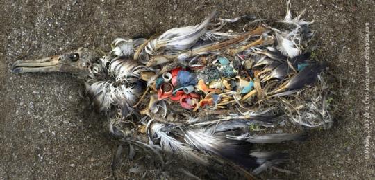 Bildergebnis für fotos von wemove.eu gegen das sterben der meere